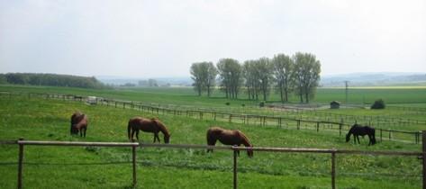 Pferde-Pension